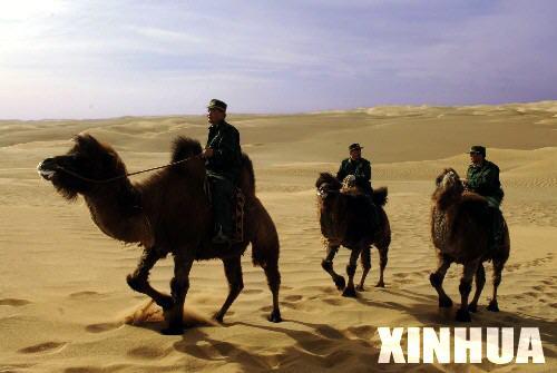 沙漠中的骆驼的歌词歌谱