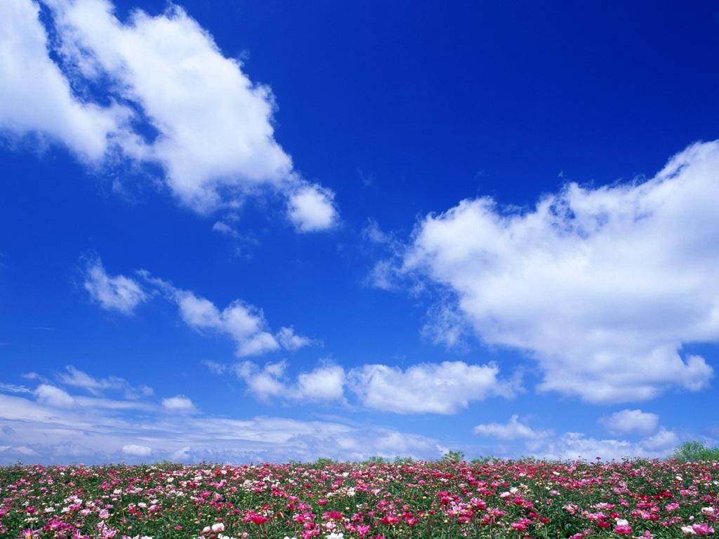美丽的蓝天白云 鲜花和草原 -桑吉卓玛 贾立夫词 王林金曲 试听 原创音